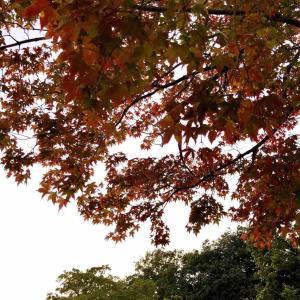 秋のオメカシ