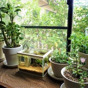 メダカと観葉植物
