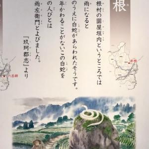 金運をもたらす 天然記念物の白蛇