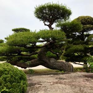 中国地方を支配した戦国大名としても有名な「毛利家」本邸の庭「毛利氏庭園」