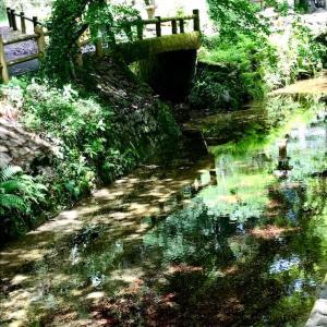 別府弁天池 コバルトブルーの池は神秘的です