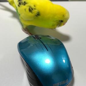 セイちゃんのちょっとした日常(4)「セイちゃんのマウス」