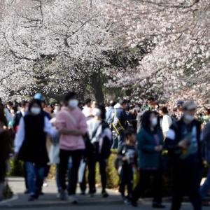 1200年ぶり?早すぎる桜の満開