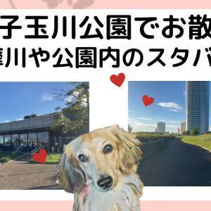 (オシャレな街)二子玉川公園で犬連れ散歩!公園内スタバもおすすめ