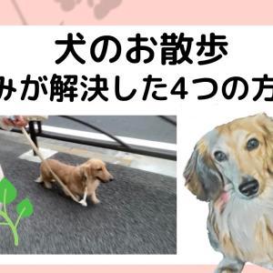 愛犬の散歩の悩み(飼い主一人では歩かない他)が解決した方法