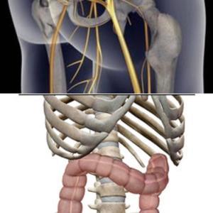 頻便=足のしびれ=腰痛は、関連ありやなしや