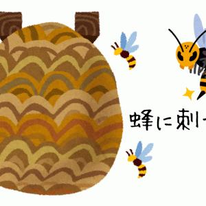 母が蜂に刺された!スズメバチの毒は恐ろしい!蜂の巣を見つけたら?
