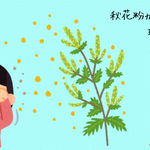 秋花粉と寒暖差アレルギー ここ数年楽になってきたその理由とは?