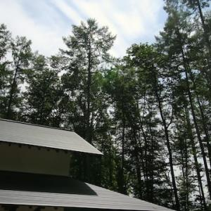 雑木林の中の家