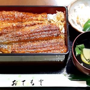 【名古屋市守山区】鰻料理店「まさむ根」