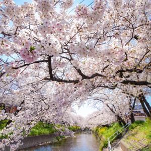 これが日本を代表する花火!!死ぬまでに一度は見たい花火!! 長岡まつり大花火大会