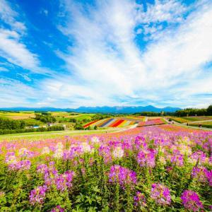 死ぬまでに一度は見てほしい!!日本を代表する絶景お花畑!!北海道美瑛「展望花畑四季彩の丘」