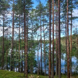 フィンランドのNational park (国立公園)へ