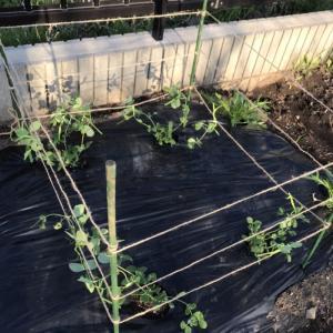 【家庭菜園】娘と野菜の種まきをしてみました。