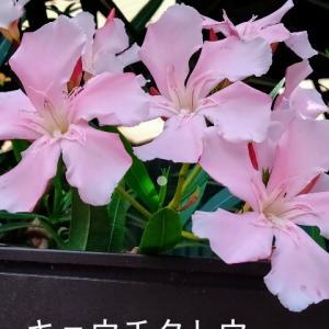コノ夏に出会った花たち