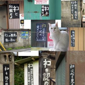 【なぜ・・・】 世界遺産になる奄美大島で「ノネコ3000匹殺処分計画」が進行中