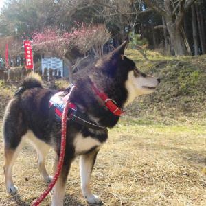 聖峰と高取山を歩いてきたよ!(その1)