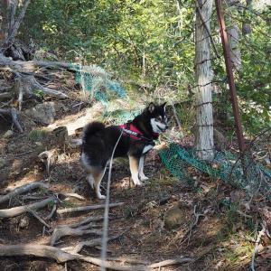 見城山へハイキングお散歩だよ(その2)