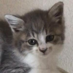 保護猫譲渡(仔猫)はなかなか難しいです。
