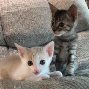 子猫の成長が早すぎて…