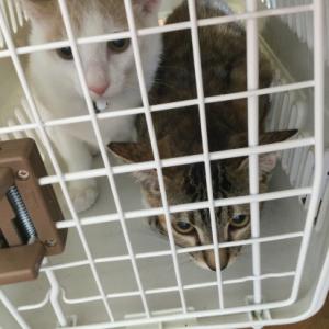 手術から帰ってきた二匹