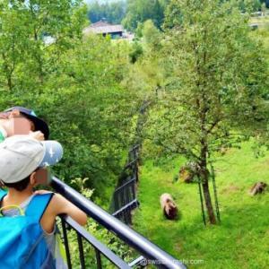 🇨🇭【シュヴィーツ】アースゴルダウの自然動物公園が家族連れには最高!広大な敷地内で1日中遊び放題