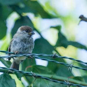 懲りずにソニー α1とSEL200600Gで野鳥撮影に行ったらカラスしか撮れなかったよ
