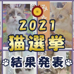 【結果発表!】猫選挙2021、おもしろポスターも紹介!