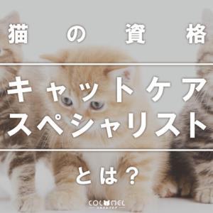 【猫資格】キャットケアスペシャリストとは?取得方法や合格率、評判と活かせる仕事紹介