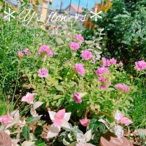 DIY花壇の植え付けプチ手直し..*困った時のハツユキカズラさま〜(つД`)ノ
