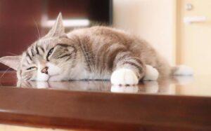 食べた後に眠いのは危険!?