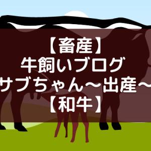 【畜産】牛飼いブログ 母牛サブちゃん〜出産〜【和牛】