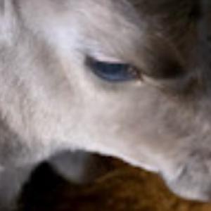 牛飼いブログ 21.8.19サブちゃん2産目【和牛】