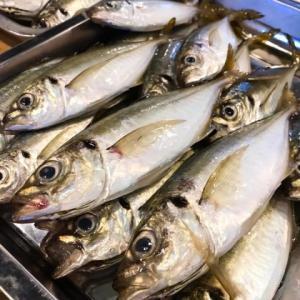 2021春の新潟のアジング釣果。【尺アジ】釣りたい!