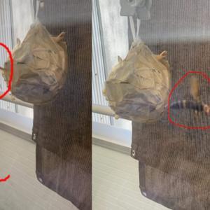 ダミー蜂の巣を置いて、3ヵ月経過報告