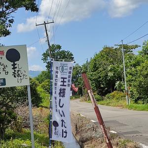 キングオブ椎茸 ばり美味椎茸を喰らう… 「七飯町鶴野に直売所がある 「福田農園」さんの王様しいたけを買ってみました