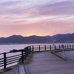 旬を迎える白いか【兵庫県香住の白いか】は8月末までがシーズン!「活いか」が食べられるおススメのお宿。