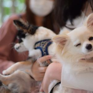 ドッグスリング 犬の抱っこ紐