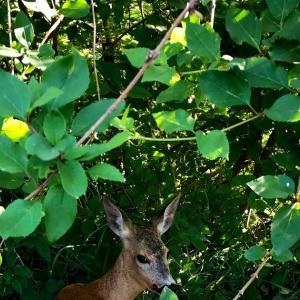 子鹿が庭に現れて、へろが、そして。。。