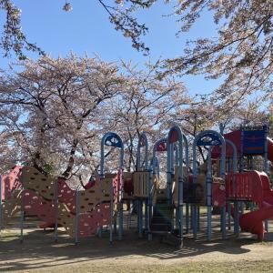 我が賃貸宅から見える桜