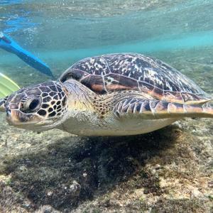 海亀に遭遇!台湾・離島「小琉球」でシュノーケリング体験