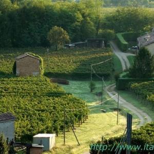 ・ スコミーゴ村 葡萄摘みが始まって、 秋の色と空気