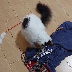 猫に紐は危険…。