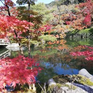 みかえり阿弥陀の永観堂 in 京都