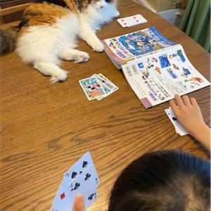 【猫たち】三毛猫と一緒に、ババ抜き!