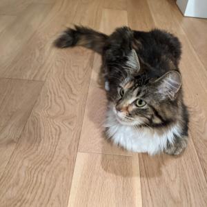 日曜日から、新しい家族(猫)が増えました。
