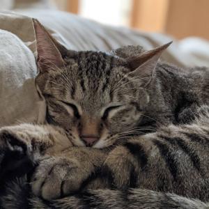 寝るネコさん達