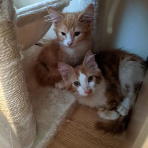 新しくネコちゃんをお迎えしました。二匹も…。