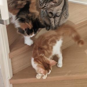 新入り2匹と先住猫3匹の様子