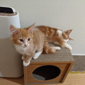 新入りの子猫ちゃん、鳳と富の様子
